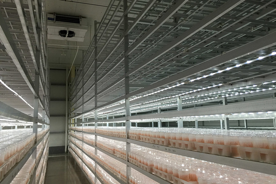 Shandong Rongfeng Edible Mushroom co., ltd (hereinafter as Rongfeng) is a hi-tech enterprise specializing in edible mushroom industry with full strain of research and development.